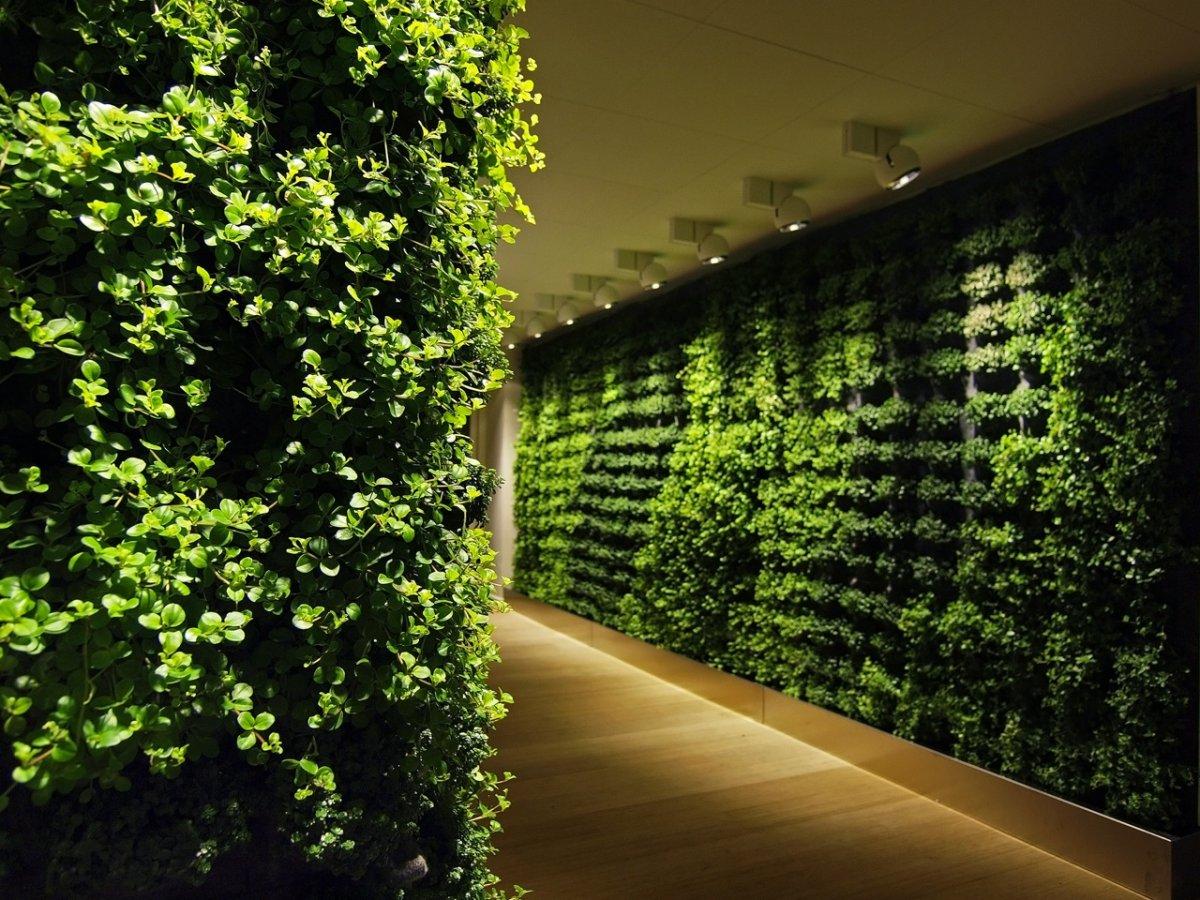 Vegetation in building green wall inkmason vegetation in building green wall mozeypictures Images